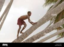 Stock Photo Boy Climbing Tree