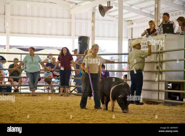 Livestock Auction Usa Stock &