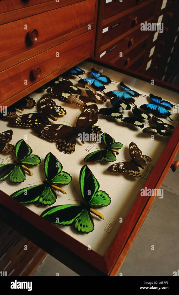 Butterflies Collection Stock &