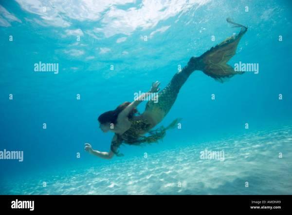 Mermaid Underwater In Shallow Water Playa Palencar West Side Cozumel Stock 8704312 - Alamy