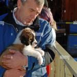 St Bernard Puppy For Sale Zakopane Poland Stock Photo Alamy