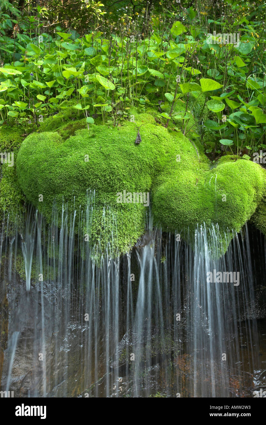 Free Fall Forest Wallpaper Waterfall Moss Shenandoah National Park Stock Photos