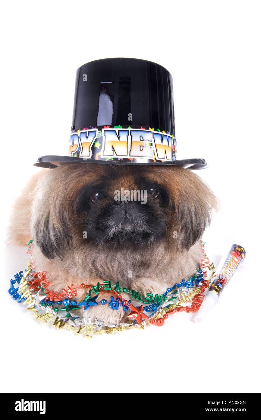 Dog With Hat Maker : maker, Happy, Pekingese, Wearing, Noise, Maker, Beads, Stock, Photo, Alamy