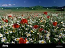 Meadow With Flowers Piano Grande Monti Sibillini