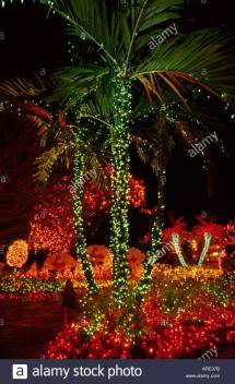 Florida Pinecrest Winter Holiday Lights Palm Trees Private