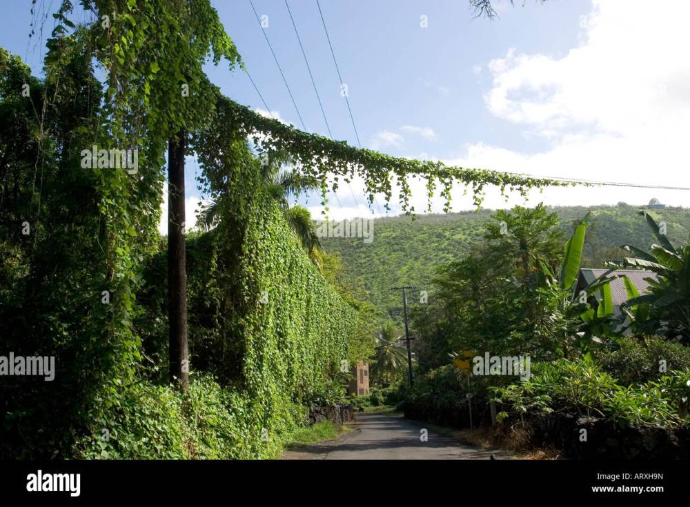 medium resolution of vines cover telephone pole and wires on rural big island street