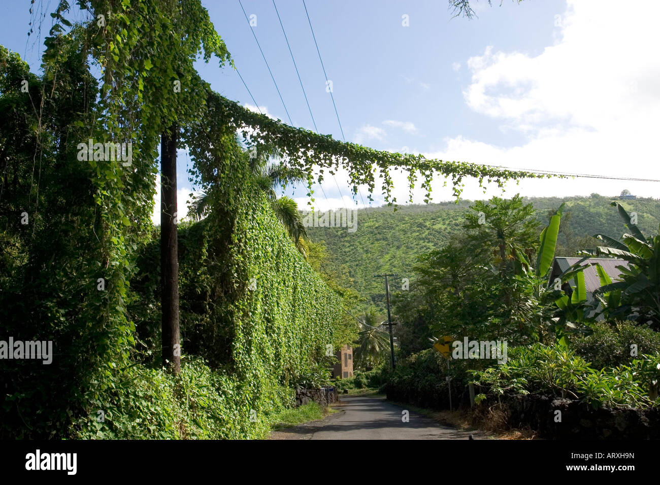 hight resolution of vines cover telephone pole and wires on rural big island street