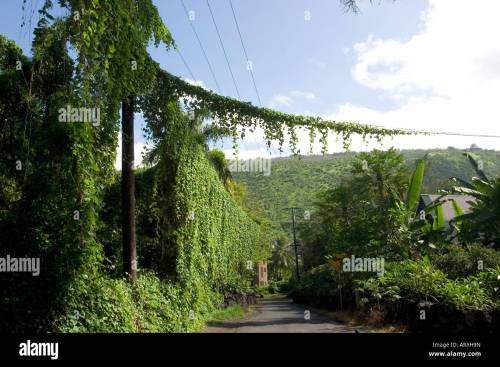 small resolution of vines cover telephone pole and wires on rural big island street