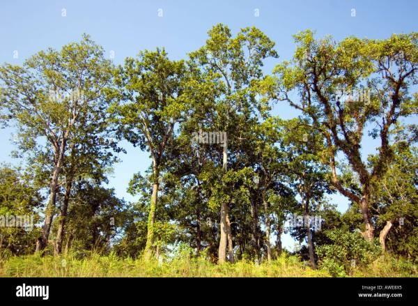 Sal Tree - Year of Clean Water