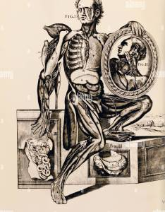 Medicine anatomy partly dissected man copper engraving anatomical atlas by berrettini also stock photos  images alamy rh