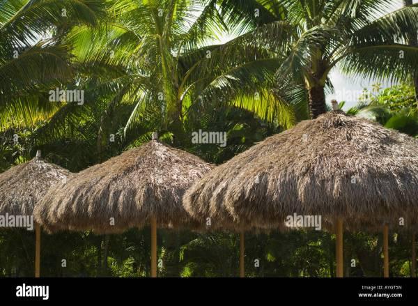 Palm Frond Umbrella Stock &