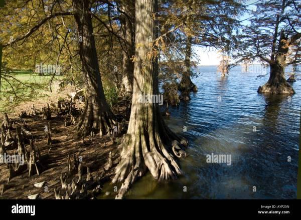 Reelfoot Lake Sportsman Resort North In Tiptonville Tn