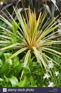Tropical plants growing in gardens near Bournemouth beach ...