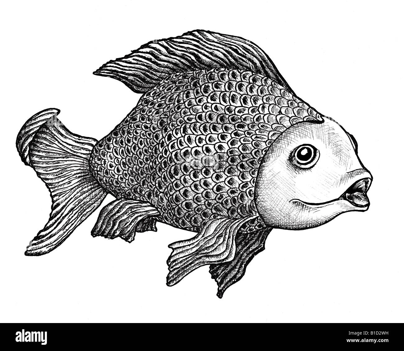 Fish Drawing Stock Photos Amp Fish Drawing Stock Images