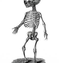 illustration human fetal skeleton [ 866 x 1390 Pixel ]