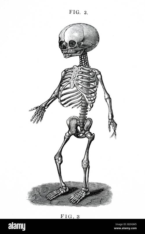 small resolution of illustration human fetal skeleton