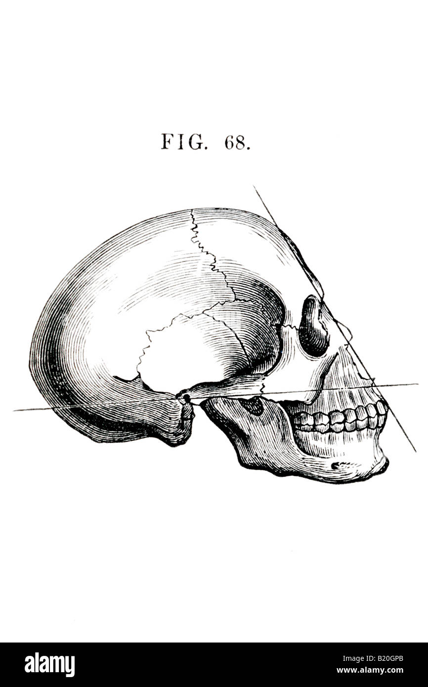 medium resolution of illustration human skull lateral view stock image