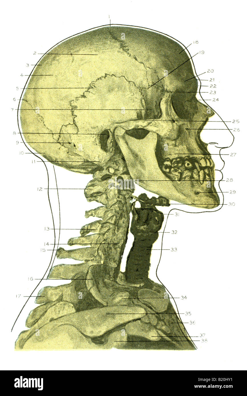 hight resolution of illustration skeleton head face and neck