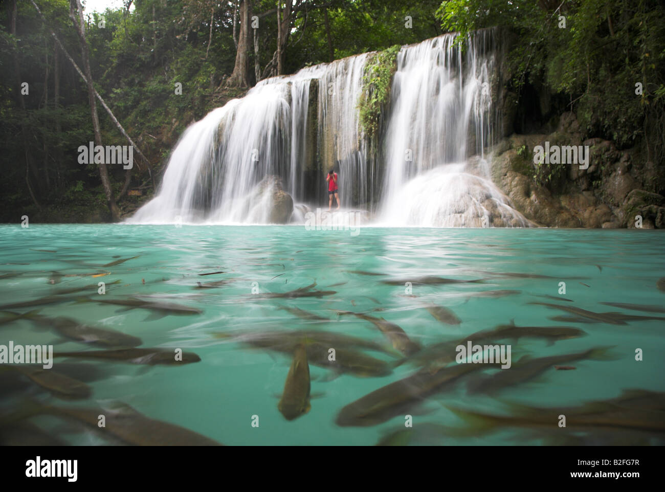 Niagara Falls Live Wallpaper Large Fish Swim Around A Waterfall At The Erawan Falls In