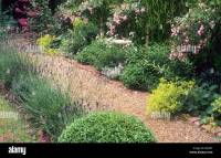 Brick and Gravel path border Rosa 'The Fairy' lavender