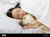 young woman and Labrador Retriever - sleeping in bed Stock ...