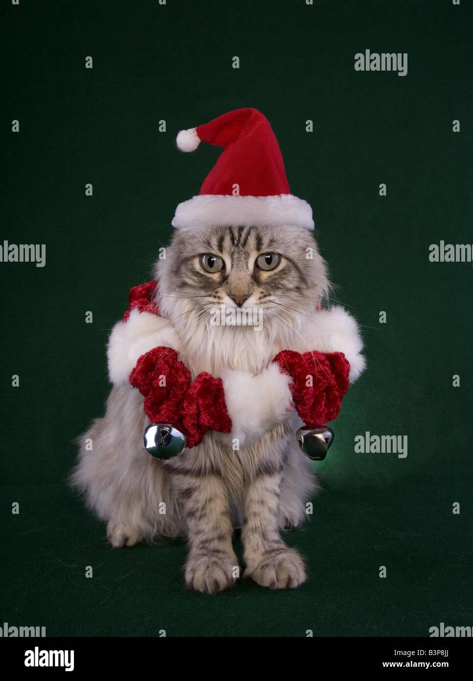 Christmas Cat Background : christmas, background, Christmas, Wearing, Santa, Green, Background, Stock, Photo, Alamy