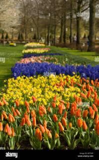 Holland Netherlands Lisse Flower Gardens Stock Photos ...