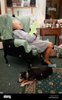 Dog Watching Tv Stock &