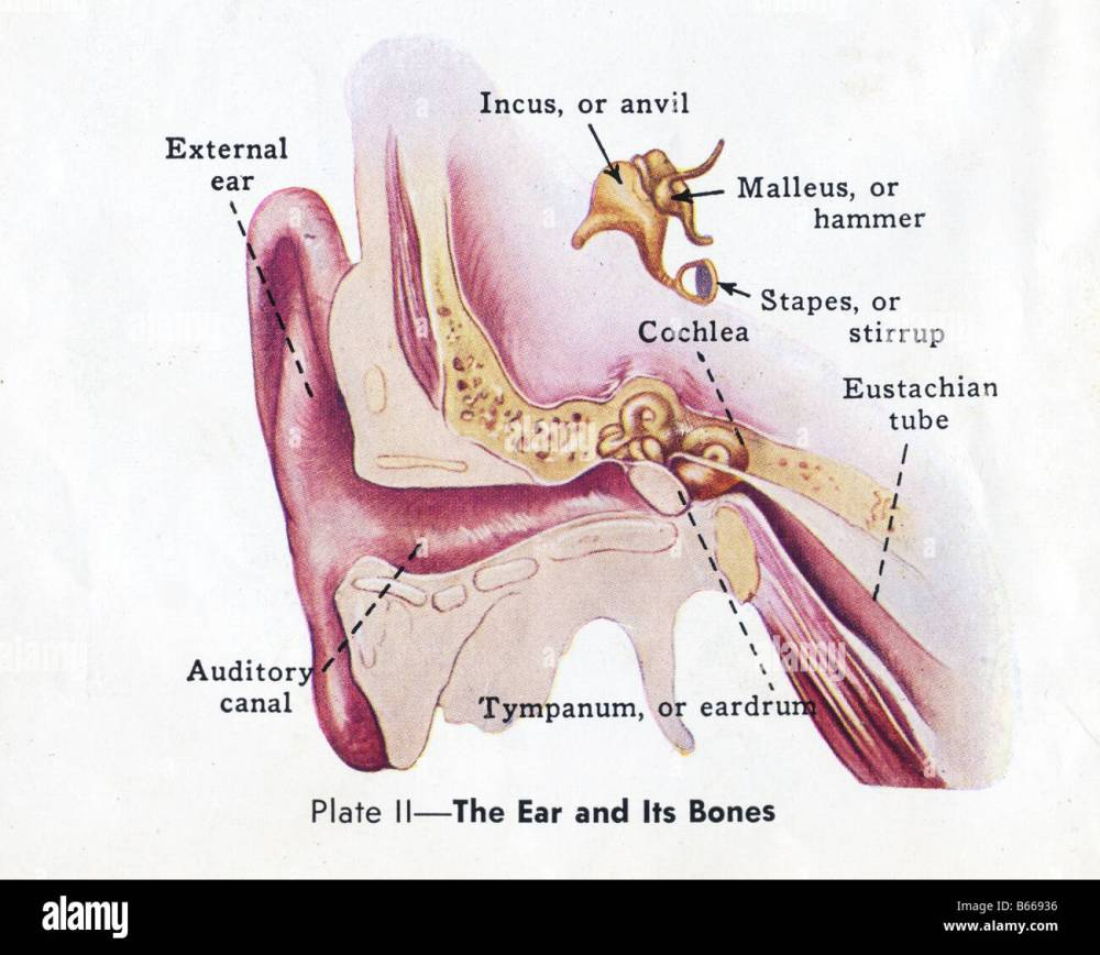 medium resolution of old medical diagram parts of the ear