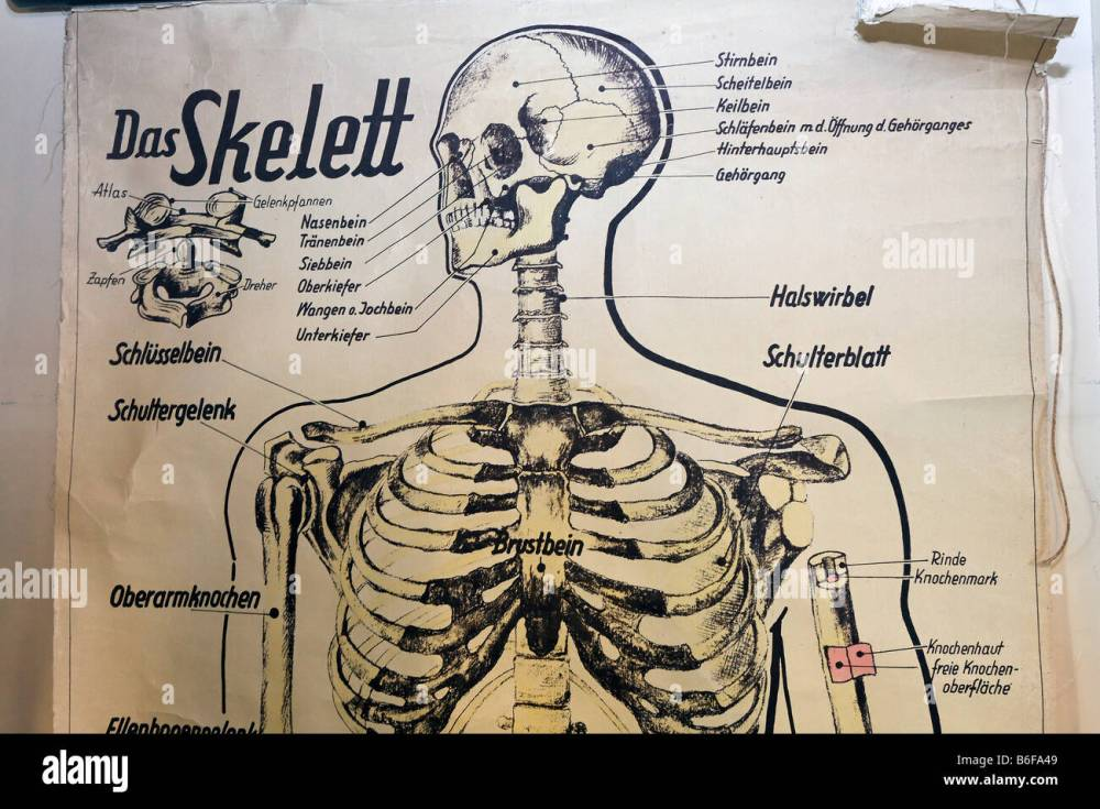 medium resolution of old diagram of a human skeleton for school lessons detail historic classroom in the