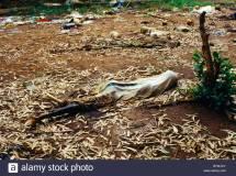 Rwanda Ngarama Church Burnt Bodies Remains Of Massacre