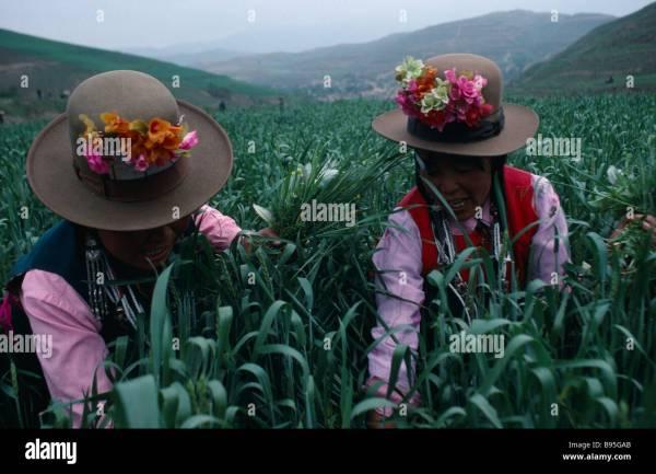 Chinese Food Qinghai Stock Photos amp Chinese Food Qinghai