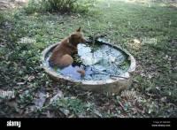 India garden pond dog cooling Asia garden-pond waterlilies ...