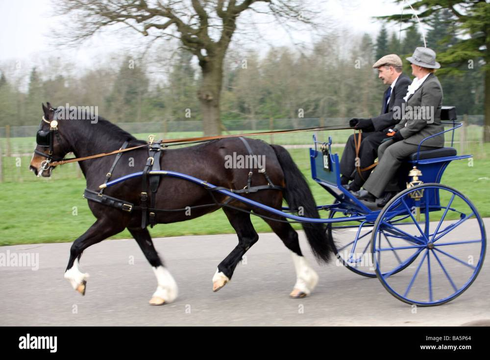 medium resolution of pony and trap moving fast at the london harness horse