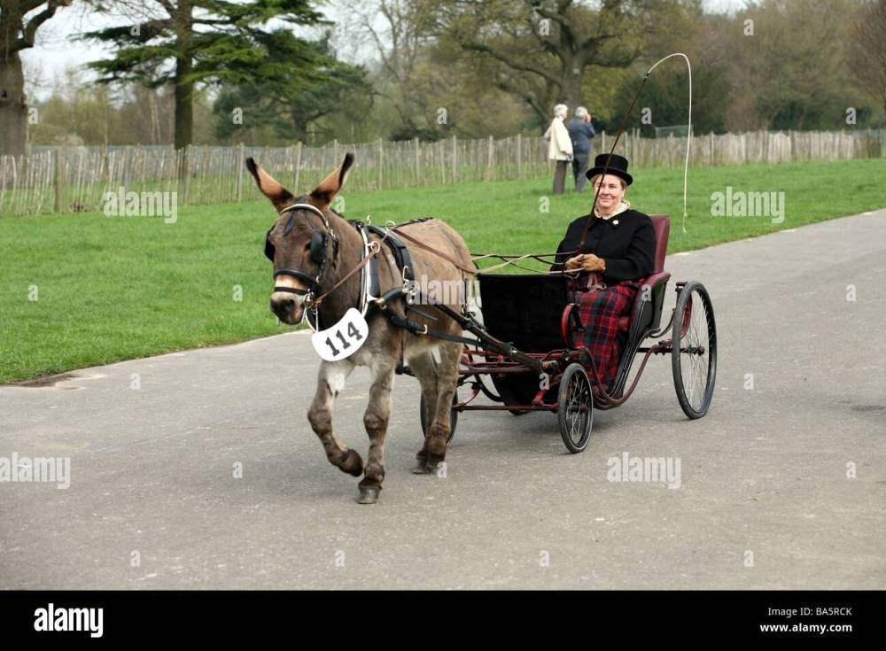 medium resolution of pony and trap at the london harness horse