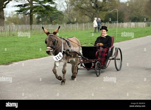 small resolution of pony and trap at the london harness horse