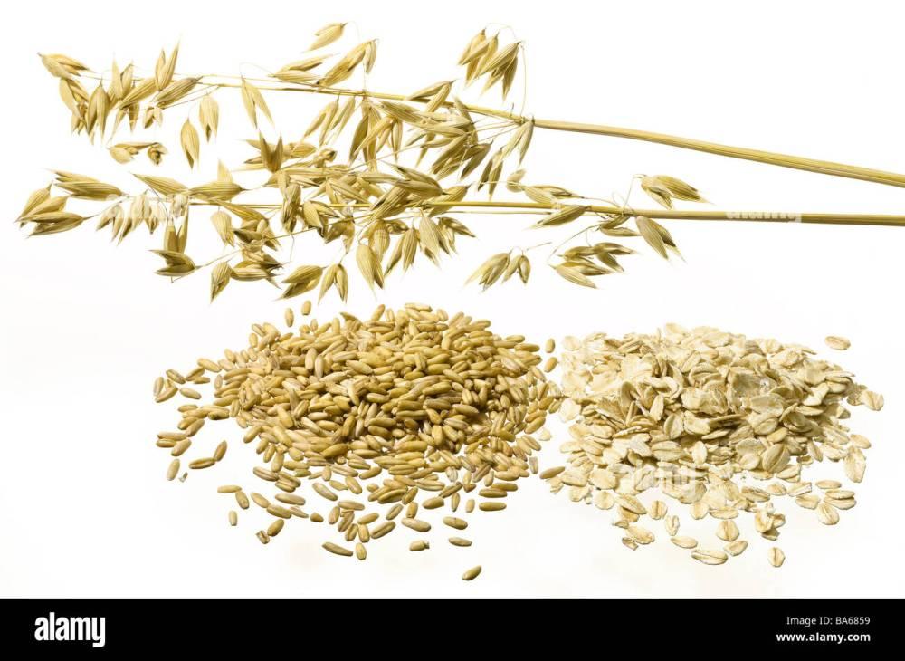 medium resolution of grains haferrispe oat grains oats getreiderispen oat grain harvest newly processes symbol useful plants culture plants