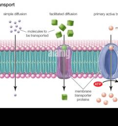 types of transport across the cell membrane include simple diffusion rh alamy com simple plant cell wall diagram cell membrane structure [ 1300 x 631 Pixel ]