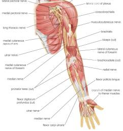 left elbow diagram wiring diagram detailed anular ligament elbow diagram left arm diagram wiring diagram origin [ 1124 x 1390 Pixel ]