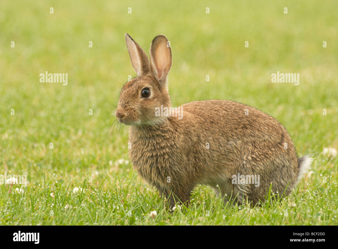 Rabbit High Resolution Stock Photography And Images Alamy