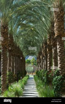 Avenue Of Palm Trees Hyatt Hotel In Indian Wells