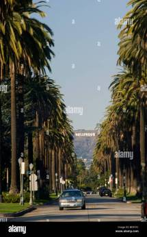 Los Angeles Palm Trees Hollywood Sign Stock &