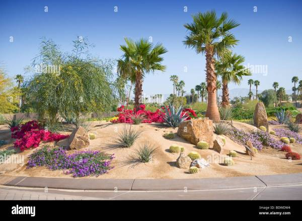 desert landscaping shown with plants