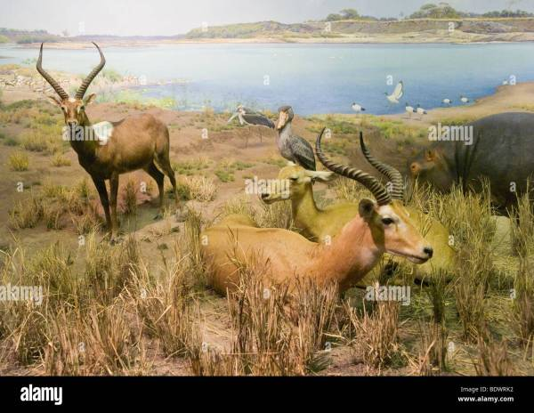 Exhibit Of African Mammals American Museum Natural Stock 25768262 - Alamy