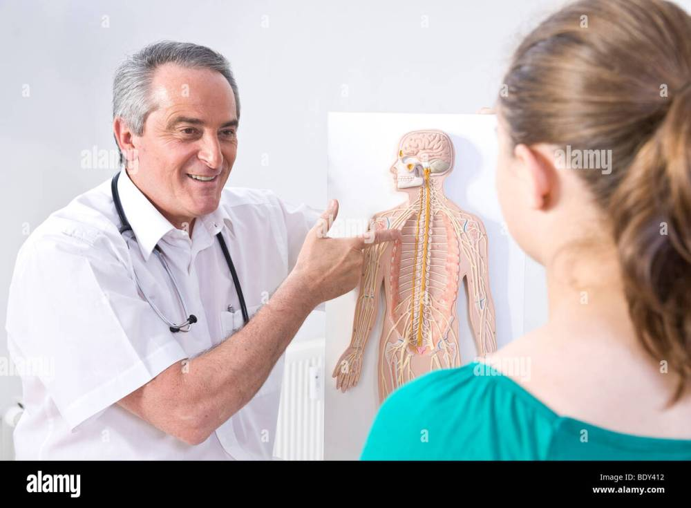 medium resolution of doctor explaining the structure of a human being with a diagram to a young patient