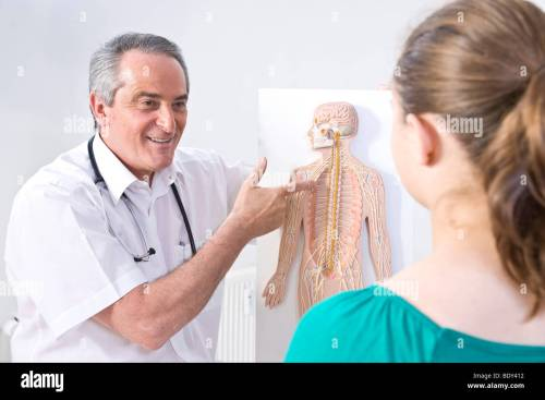 small resolution of doctor explaining the structure of a human being with a diagram to a young patient