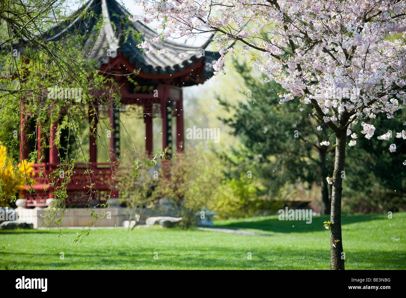 China garten berlin munich germany pictures and travel for Gartenausstellung munchen