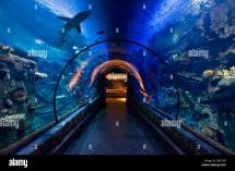 Shark Reef Aquarium Mandalay Bay Hotel Las Vegas Nevada