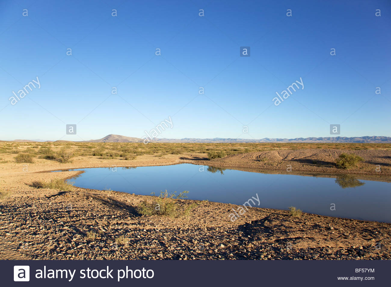 stock ponds stock photos