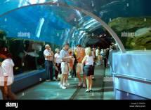 Georgia Aquarium Underwater Tunnel